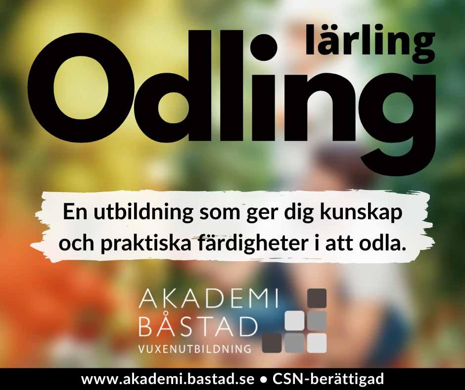 Odling